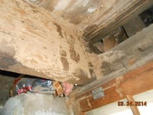 termite damage 002