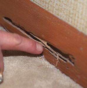 termite_3_image (518x525)
